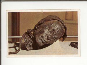 Tollundmandens hoved i sin montre på Silkeborg Museum.